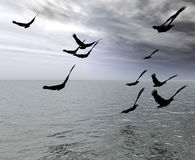 The Birds. This is some birds over the sea Royalty Free Stock Photos