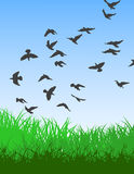 Birds. Vector Illustration - Flying birds in the morning Royalty Free Stock Image