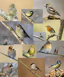 Birds. A beautiful birds designed background Royalty Free Stock Photo