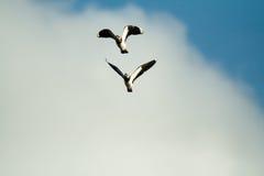 Birds. Flighting wild birds on sky near samall lake stock photo