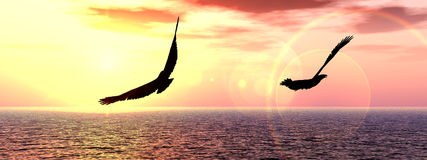 The Birds 8. This is a bird over the sea Stock Images