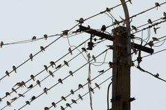 Birds Royalty Free Stock Photography