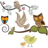 Birds. Assorted birds including owls doves and sparrows Stock Image