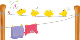 Birds. Illustration of four birds on a clothes line Royalty Free Stock Photography