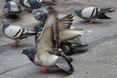 Birds aa Royalty Free Stock Image