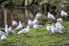 Birds ab Royalty Free Stock Image