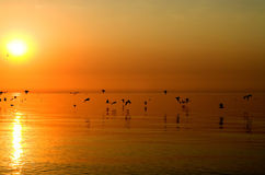 Birds above orange sea. Brood of birds are migrating to other countries royalty free stock image
