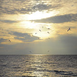 Birds above the sea. Royalty Free Stock Photo