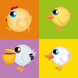 Birds Royalty Free Stock Photography
