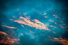 Birds across early morning clouds Royalty Free Stock Photos