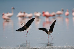 Birds of africa Stock Photography
