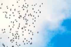 Birds against blue sky Stock Image
