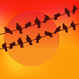 Birds against the sunset. Colorful Vector. Stock Image