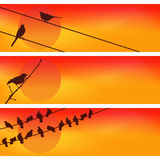 Birds against the sunset. Three Vectors. Royalty Free Stock Photo