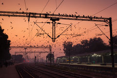 Birds at Agra Cantt Station. AGRA, INDIA - JANUARY 13, 2015 : Birds flocking around the overhead power lines at Agra Cantonment railway station at sunset Stock Photos