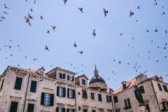 Birds in the air Royalty Free Stock Photography
