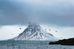 Birds on Air Near Snow Covered Mountain Surrounded With Water Royalty Free Stock Image