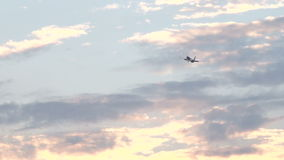 Birds and airplanes flying through bermuda sky at sunset stock footage