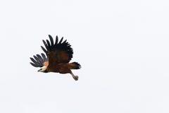 Birds in Amazon in flight Stock Photo