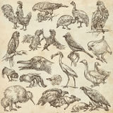 Birds. Animals around the World - An hand drawn full sized pack. Stock Photos