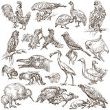 Birds. Animals around the World - An hand drawn full sized pack. Stock Images