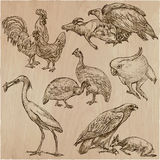 Birds. Animals around the World - An hand drawn vector pack. Lin Royalty Free Stock Images