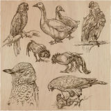 Birds. Animals around the World - An hand drawn vector pack. Lin Stock Image