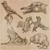 Birds. Animals around the World - An hand drawn vector pack. Lin Royalty Free Stock Image
