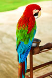 Birds, Animals. Red Scarlet Macaw Parrot. Travel, Tourism. Thail Royalty Free Stock Image