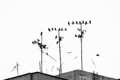 Birds on the antennas Royalty Free Stock Images