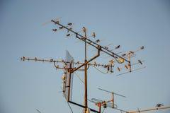 Birds on antennas Royalty Free Stock Image