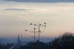 Birds on the antennas at sunrise Royalty Free Stock Images
