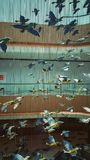 Birds arch architecture interior. Birds flying architecture art in Uptown Starling, Malaysia. The bird statues will flow when the wind blows Royalty Free Stock Photo