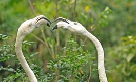 Birds arguing Stock Images