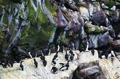 Birds At Cape St. Mary S Bird Sanctuary Stock Photos