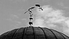 Birds Atop Mosque in Istanbul, Turkey Royalty Free Stock Images