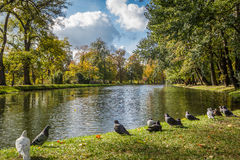 Birds in autumn in the park by the river Royalty Free Stock Photos