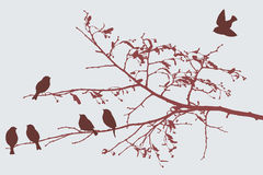 Birds in the autumn Royalty Free Stock Image