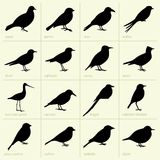Birds. Available in high-resolution and several sizes to fit the needs of your project Royalty Free Stock Images