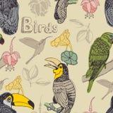 Birds background Royalty Free Stock Photos