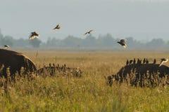 Birds backlit Stock Image