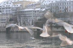 Birds in Basel Stock Image