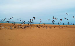 Birds on the beach Royalty Free Stock Photography
