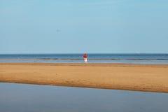 Birds on beach. Stock Photos