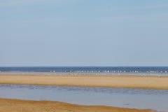 Birds on beach. Royalty Free Stock Photos