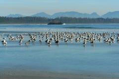 Birds on beach stock image