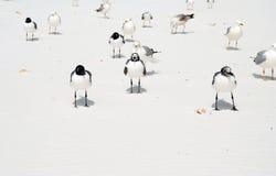 Birds on beach. Birds walking on beach, Florida Stock Photo