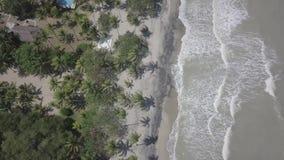 Birds and beach. Aerial footage in Santa Marta, Colombia, beach scene whit some birds!!! enjoy stock video