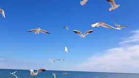 Birds on the beach. Feeding birds in slow motion, seagulls against the sky stock footage