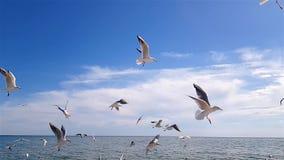 Birds on the beach. Feeding birds in slow motion, seagulls against the sky stock video footage